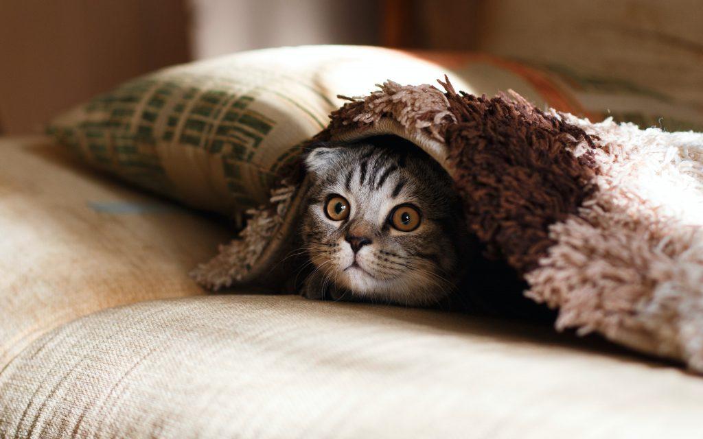 A tabby kitten peeking out from underneath a cushion. Peek is spelled P-E-E-K.